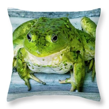 Frog Portrait Throw Pillow by Edward Peterson