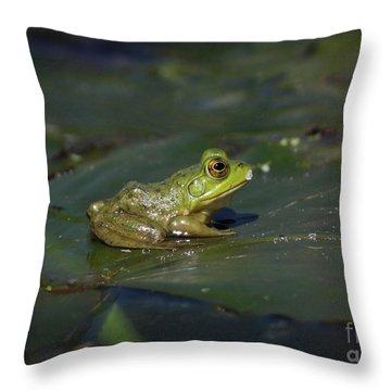 Froggy 2 Throw Pillow by Douglas Stucky