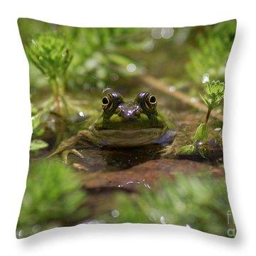 Froggy Throw Pillow by Douglas Stucky