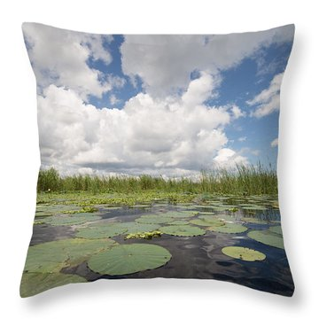 From A Frog's Point Of View - Lake Okeechobee Throw Pillow by Christopher L Thomley