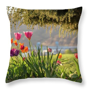 From The Driveway Throw Pillow by Brad Stinson