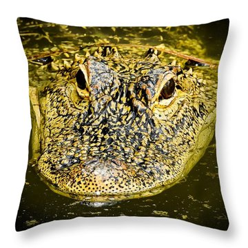 From The Series I Am Gator Number 5 Throw Pillow