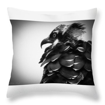 From The Series The Osprey Number 4 Throw Pillow