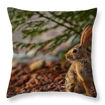 Throw Pillow featuring the photograph Frontyard Bunny by Dan McManus