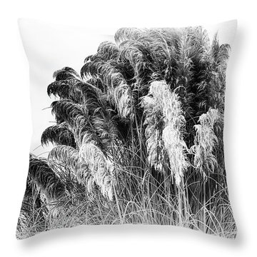 Frost On The Pampas Grass Throw Pillow