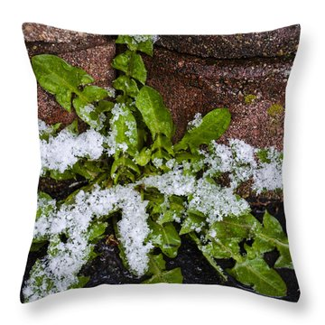 Frosted Dandelion Leaves Throw Pillow