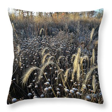 Frosted Foxtail Grasses In Glacial Park Throw Pillow