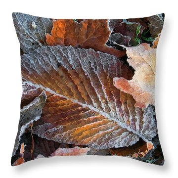 Throw Pillow featuring the photograph Frosted Painted Leaves by Shari Jardina
