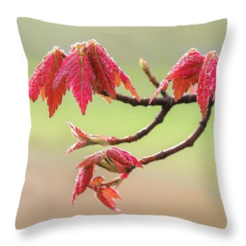 Frosty Maple Leaves Throw Pillow