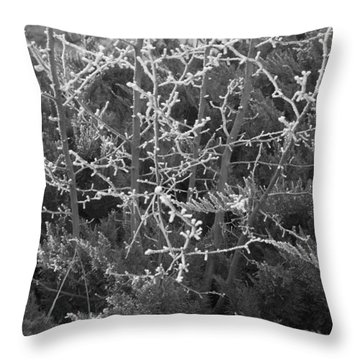 Throw Pillow featuring the photograph Frosty Morning # 3 by Antonio Romero