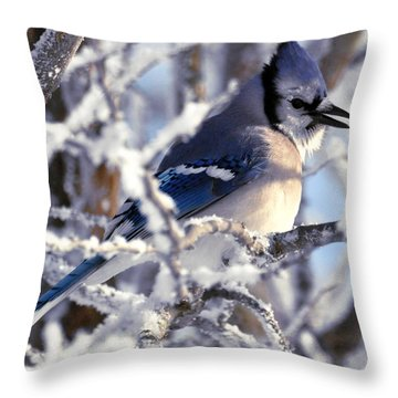 Frosty Morning Blue Jay Throw Pillow