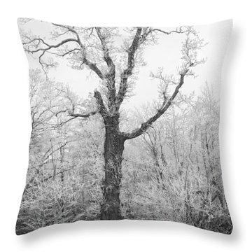 Throw Pillow featuring the photograph Frosty Old Tree by Ken Barrett