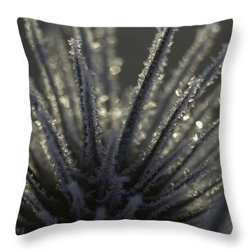 Frosty Teasel Throw Pillow