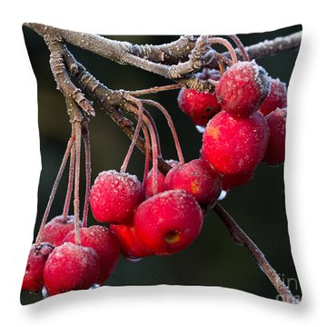 Frosted Apples Throw Pillow