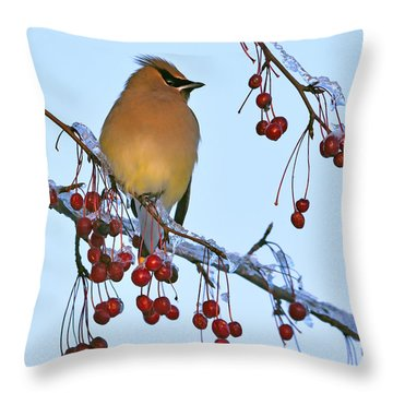 Throw Pillow featuring the photograph Frozen Dinner  by Tony Beck