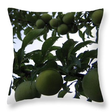 Fruit And Sky_raindrops Throw Pillow
