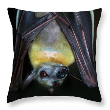 Throw Pillow featuring the photograph Fruit Bat by Anthony Jones