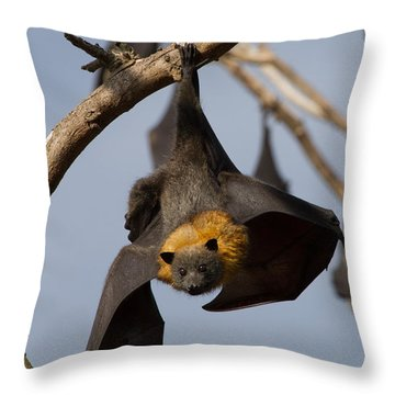 Fruit Bat Hanging Throw Pillow