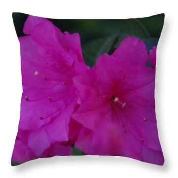 Fuchsia Azaleas Throw Pillow by Robyn Stacey