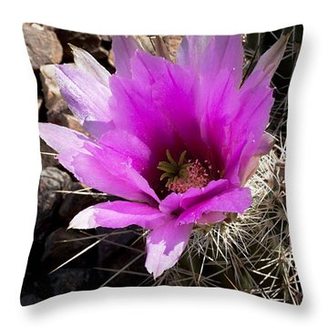 Throw Pillow featuring the photograph Fuchsia Cactus Blossom by Phyllis Denton
