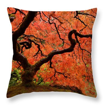 Fuego Throw Pillow by Don Schwartz