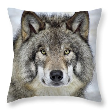 Throw Pillow featuring the photograph Full Attention  by Tony Beck