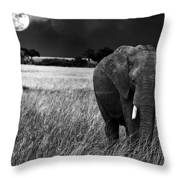 Full Moon Night Throw Pillow by Charuhas Images