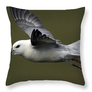 Fulmar In Flight Throw Pillow