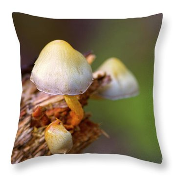 Throw Pillow featuring the photograph Fungi On A Stump by Sharon Talson