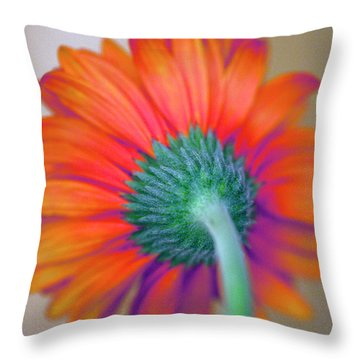 Funky Gerbera Throw Pillow by Amanda Barcon