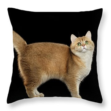 Throw Pillow featuring the photograph Funny British Cat Golden Color Of Fur by Sergey Taran