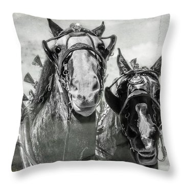 Throw Pillow featuring the photograph Funny Draft Horses by Mary Hone
