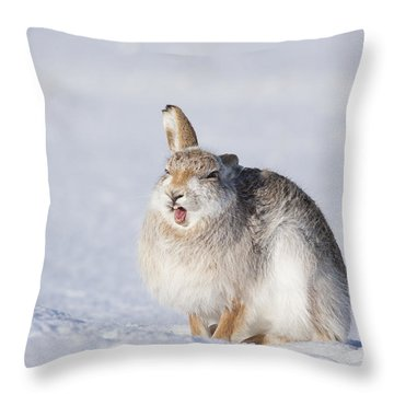 Funny Face - Mountain Hare - Scottish Highlands  #13 Throw Pillow