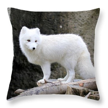 Furry Arctic Fox  Throw Pillow