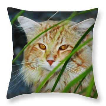 Throw Pillow featuring the photograph Furtive Feline by Richard Stephen