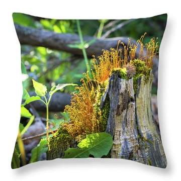 Throw Pillow featuring the photograph Fuzzy Stump by Bill Pevlor