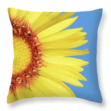 Gaillardia Aristata   Blanketflower Throw Pillow by Jim Hughes