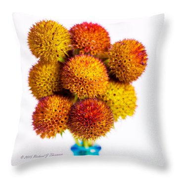 Gaillardia Seed Heads In A Vase Throw Pillow
