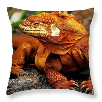 Galapagos Iguana Throw Pillow