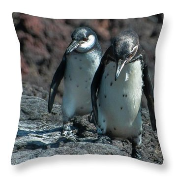 Galapagos Penguins  Bartelome Island Galapagos Islands Throw Pillow