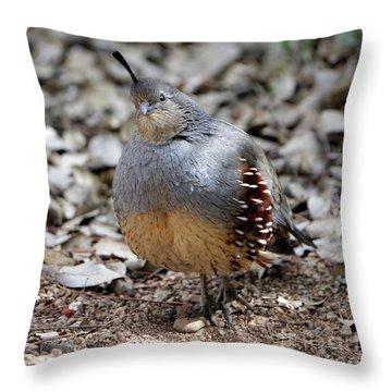 Gambel's Quail Throw Pillow