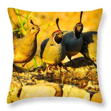 Gambel's Quail Foursome Throw Pillow