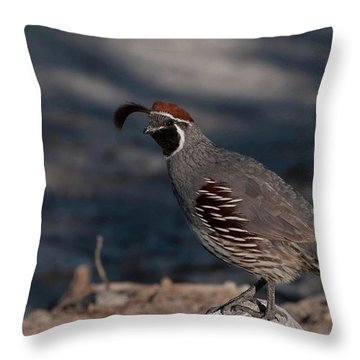 Gambel's Quail Throw Pillow