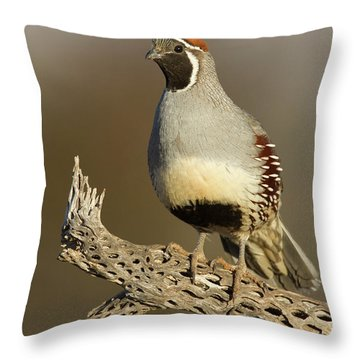 Gambel's Quail On Cactus Rib Throw Pillow