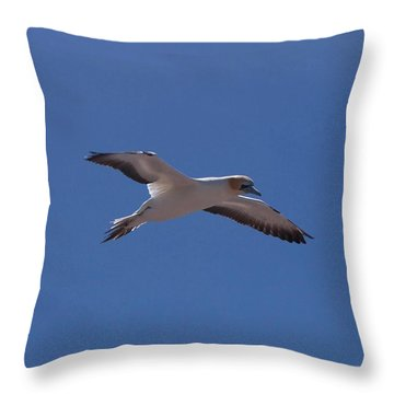 Gannet #1 Throw Pillow