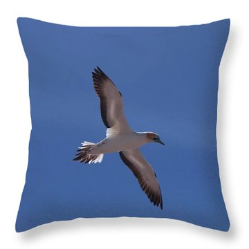 Gannet #2 Throw Pillow