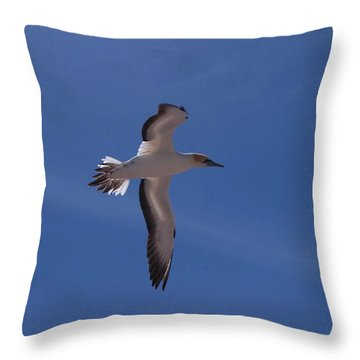 Gannet #3 Throw Pillow