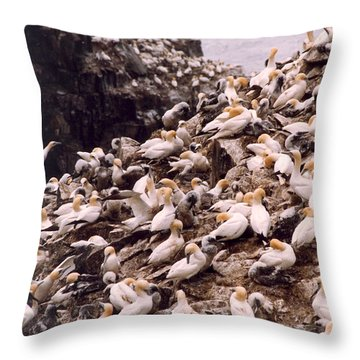Gannet Cliffs Throw Pillow by Mary Mikawoz