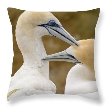 Throw Pillow featuring the photograph Gannet Pair 1 by Werner Padarin