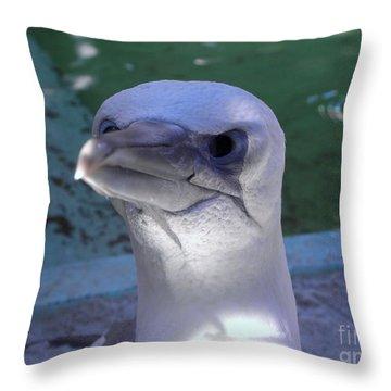 Gannet Up Close Throw Pillow